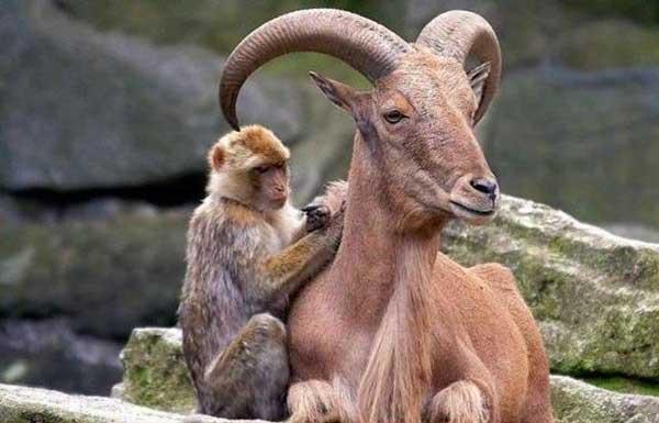Животные разное картинки inaprocess